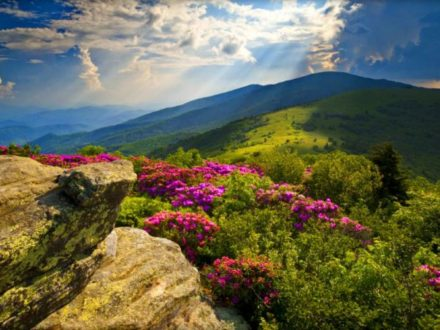 Spring Color along the Blue Ridge Parkway